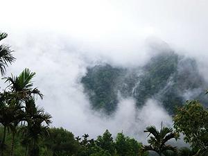 山嵐中的梅園